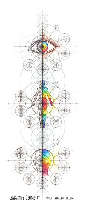 Nathalie Strassburg Intuitive Geometry Human Anatomy Series Art