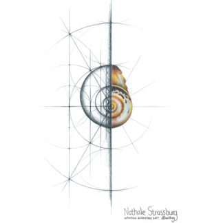 Nathalie Strassburg Original Intuitive Geometry Shell Art