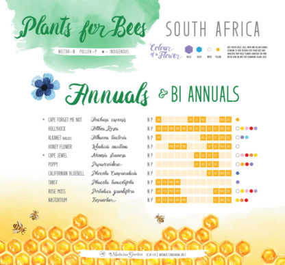 Plants for Bees – South Africa - Annuals / Bi Annuals