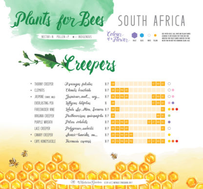Plants for Bees – South Africa - Creepers