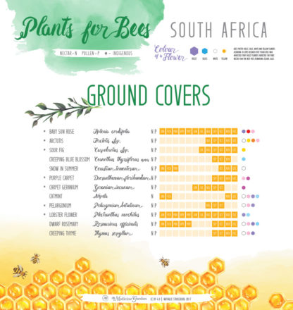 Plants for Bees – South Africa - Ground Covers