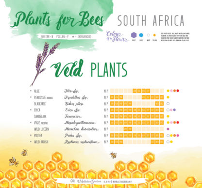 Plants for Bees – South Africa - Veld Plants