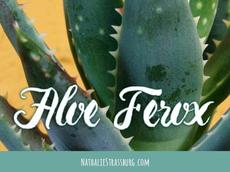 Aloe Ferox Growing Guide