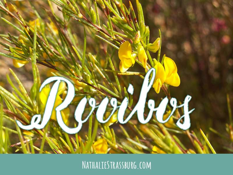 Rooibos Growing Guide