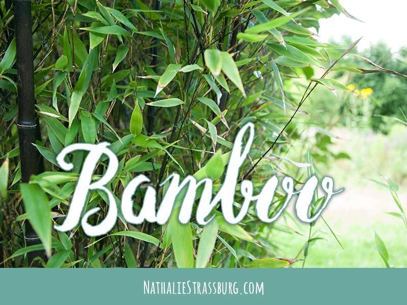Bamboo Growing Guide