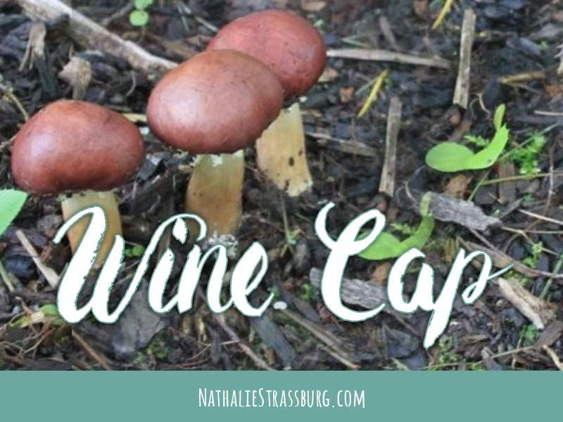 Wine Cap Stropharia mushroom growing guide